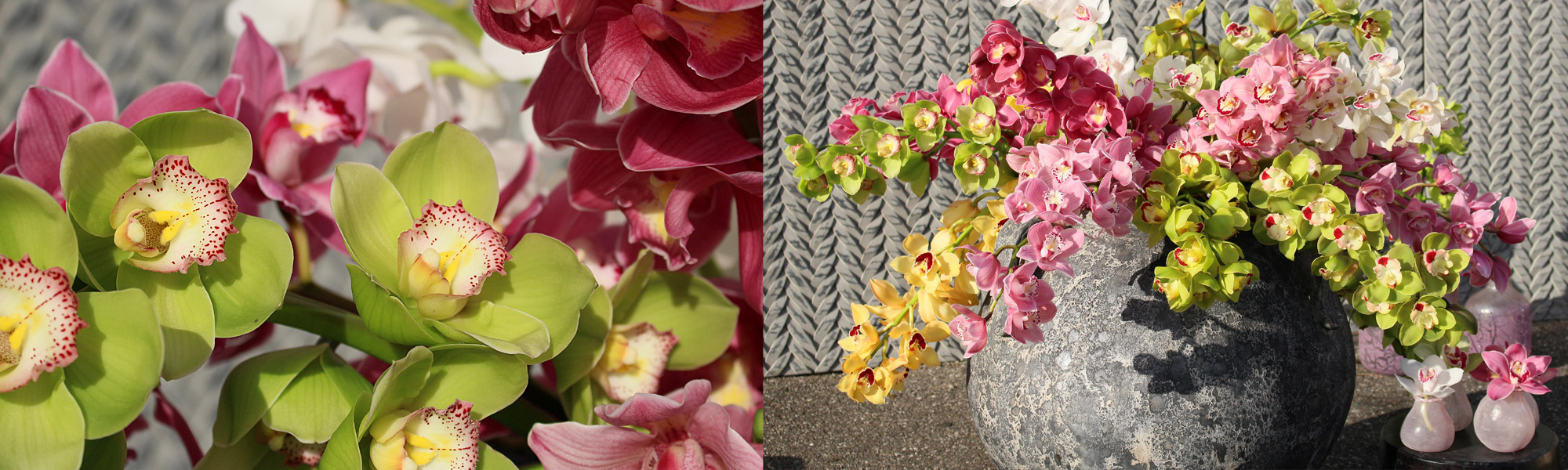 header-cymbidium2