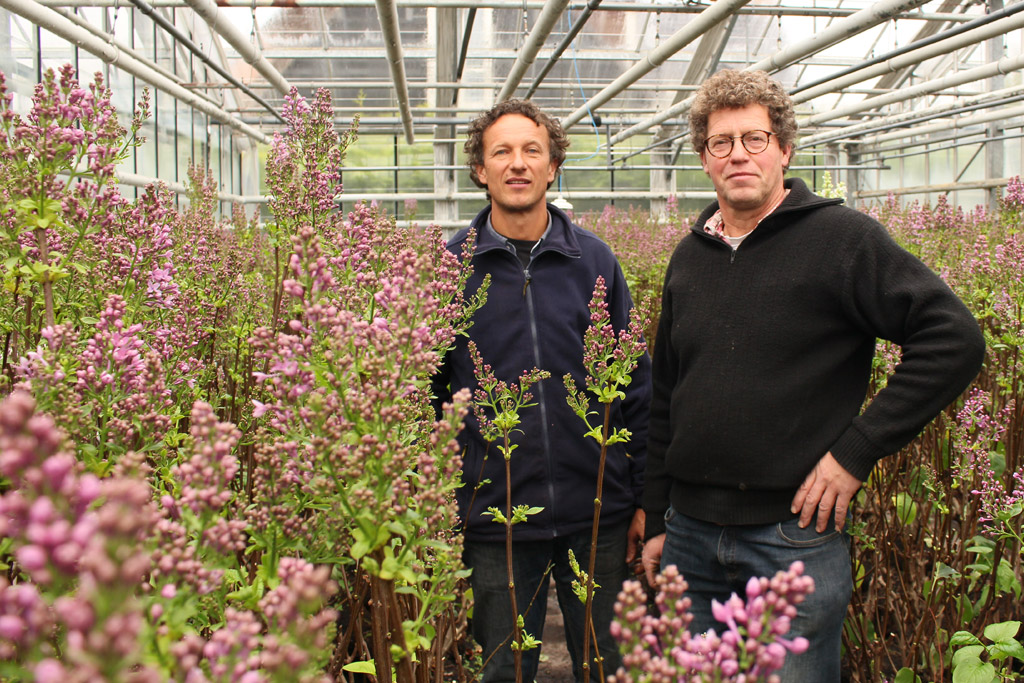 Passion For Lilacs – A Real Aalsmeer Flower